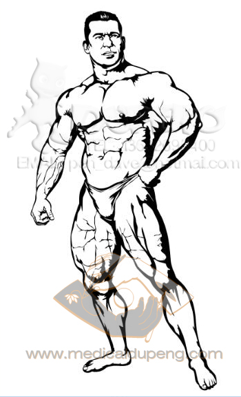 male body building papercut style