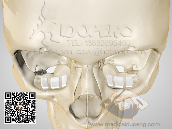Skull_with_e-PTFE_HDRStudioRig02_01_watermarked