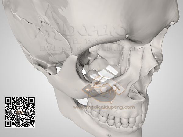 Skull_with_e-PTFE_HDRStudioRig03-watermarked