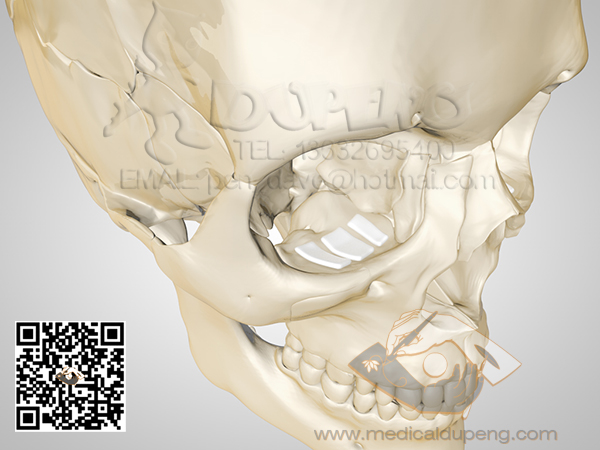 Skull_with_e-PTFE_HDRStudioRig03_01_watermarked