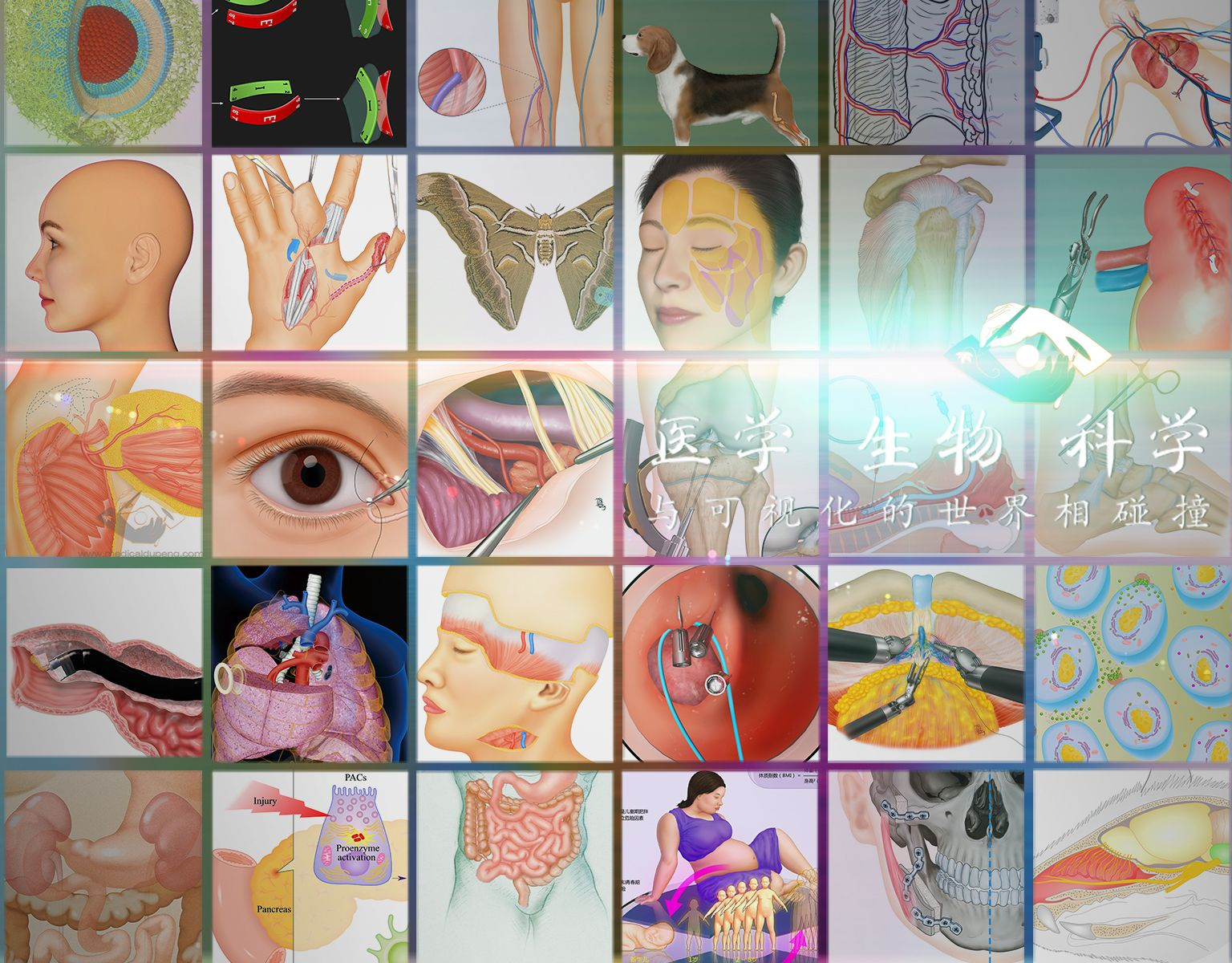 医学插画师-动画师-阿杜将医学、生物、科学与可视化的世界精彩碰撞!